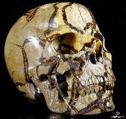 "Titain 13.4"" Dragon Septarian Stone Carved Crystal Skull, Super Realistic"