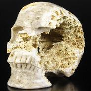 "Lifeisized 7.9"" Coral Fossil Geode Carved Crystal Skull, Super Realistic"
