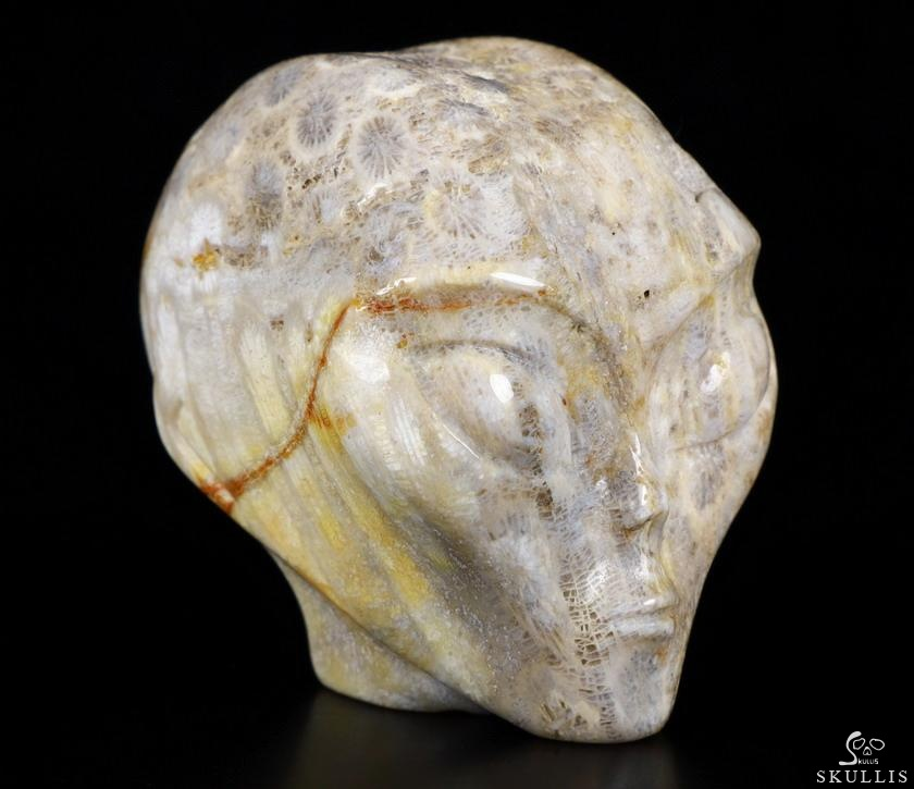 Coral Fossil Crystal Female Alien Skull