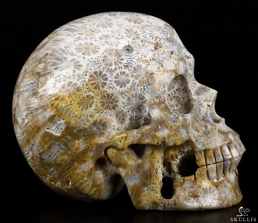 Coral Fossil Crystal Skull