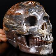 "Lifesized 7.0"" Petrified Wood Carved Crystal Skull, Realistic, Crystal Healing"