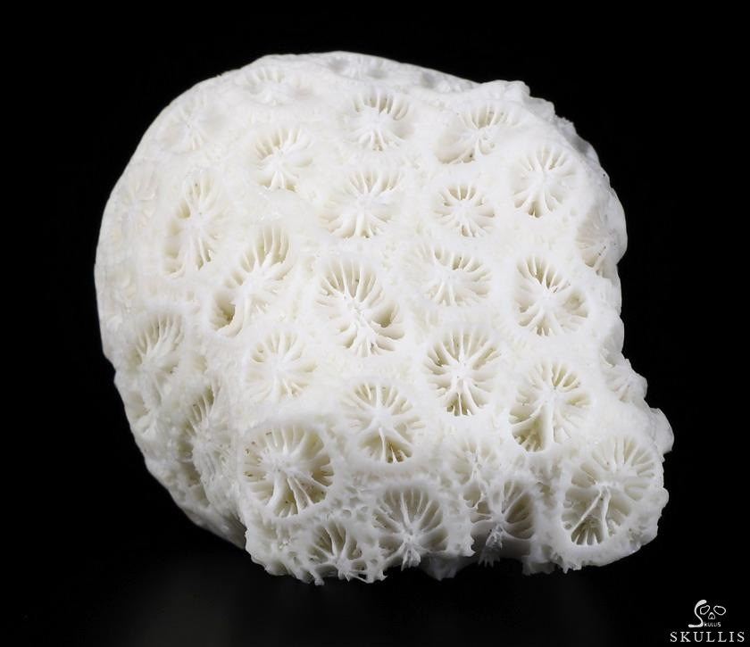White Coral Crystal Female Alien Skull