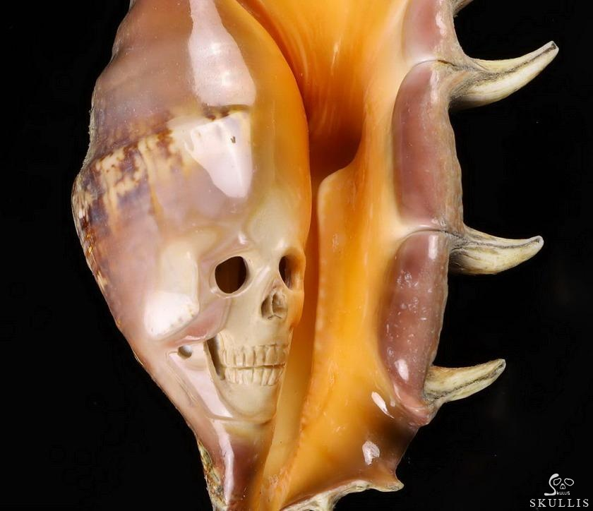 Smooth Spider Conch Crystal Skull