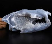 "Nice 8.1"" GRAY & WHITE Agate Geode Carved Crystal Wolf Skull Sculpture, Crystal Healing"