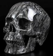 "5.0"" Gray Coral Fossil Carved Crystal Skull,Super Realistic, Crystal Healing"
