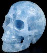 "Huge 5.0"" Blue Calcite Carved Crystal Skull, Realistic, Crystal Healing"