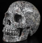 "Huge 5.0"" Crinoid Fossil Carved Crystal Skull, Realistic, Crystal Healing"