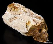 "Mineral Specimen 4.1"" Petrified Wood Branch Carved Crystal Skull Sculpture"