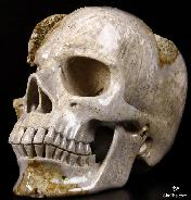 "Giant 7.2"" Coral Fossil Carved Crystal Skull, Realistic"