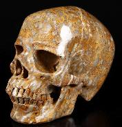 "HUGE 7.3"" Petrified Coral Fossil Carved Crystal Skull, Super Realistic"