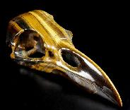 "Awesome Flash Gemstone Giant 9.3"" Gold Tiger Eye Carved Crystal Raven Skull"