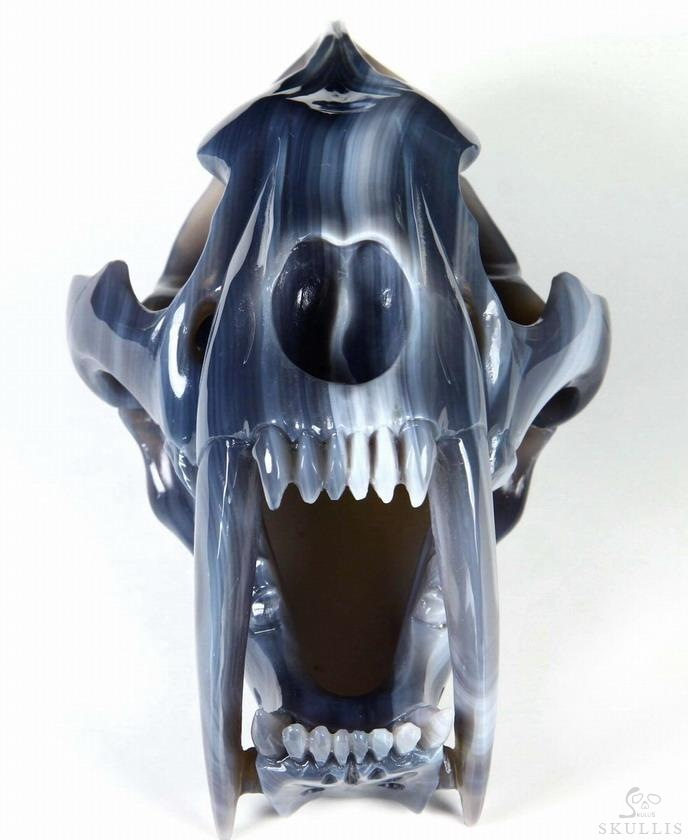 Grey & White Agate Crystal Smilodon SABER-TOOTHED Tiger/Cat Skull