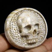 Coral Fossil Carved Crystal Skull Buckle