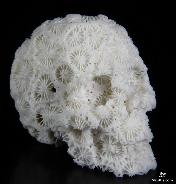 "1.9"" White Coral Carved Crystal Skull, Realistic"