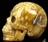 "Gemstone 2.0"" Coral Fossil Carved Crystal Skull, Realistic"