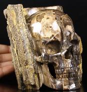 "Huge 4.6"" Petrified Wood Branch Carved Crystal Skull"
