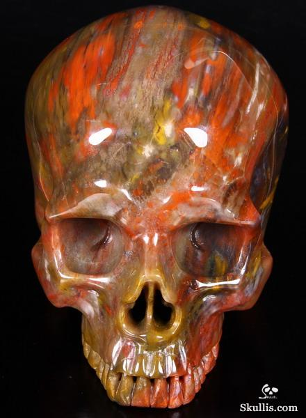 Petrified Wood Crystal Skull