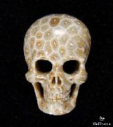 Gemstone Coral Fossil Carved Crystal Skull Pendant with Sterling Silver