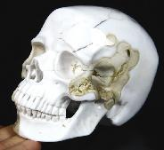 "Huge 4.6"" White Chalcedony Carved Crystal Skull, Super Realistic"