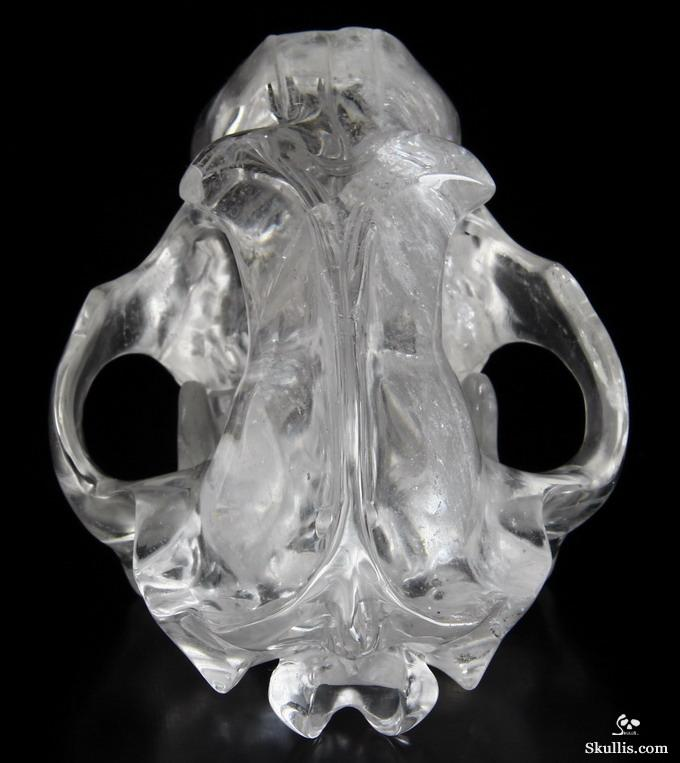 Quartz Rock Crystal Crystal Smilodon SABER-TOOTHED Tiger/Cat Skull