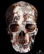 "Gemstone Huge 4.8"" Red Crazy Lace Agate Carved Crystal Skull, Super Realistic"