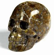 "2.0"" Coffee Opal Carved Crystal Skull, Realistic"