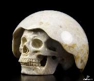 "Cute Nice 3.0"" Coral Fossil Carved Crystal Skull"