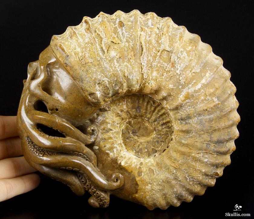 Ammonite Fossil Crystal Skull & Octopus Sculpture