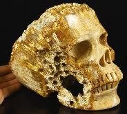"Amazing Lifesized 7.6"" Coral Fossil Carved Crystal Skull"