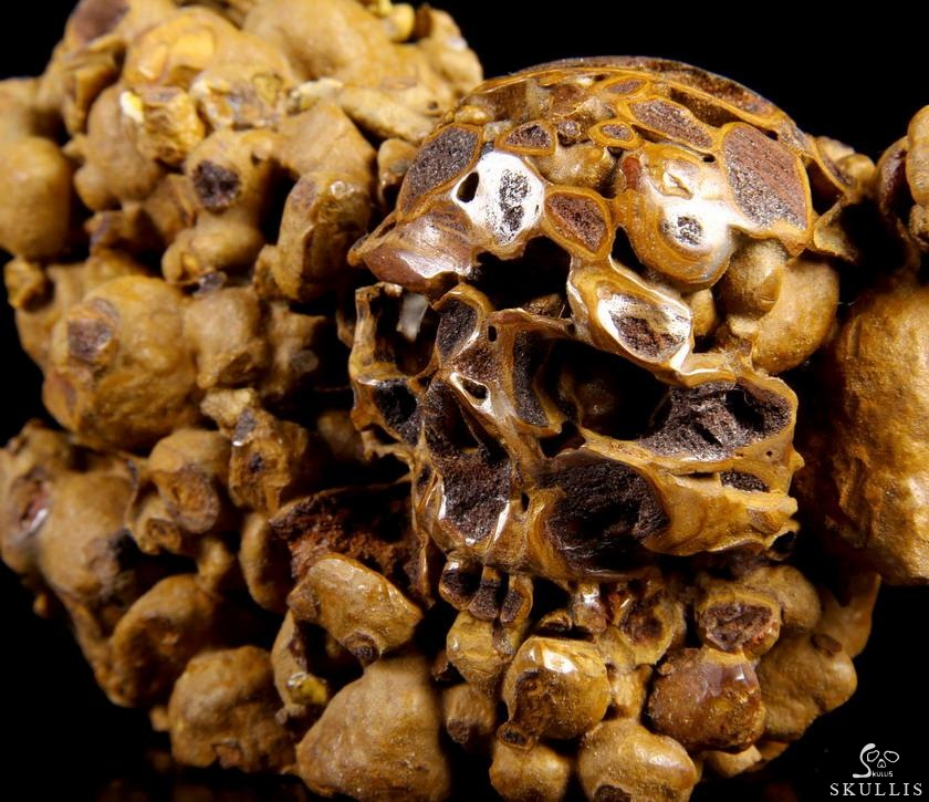Turtle Dung Fossil Crystal Skull