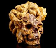 "3.5"" Turtle Dung Fossil Carved Crystal Skull, Realistic"