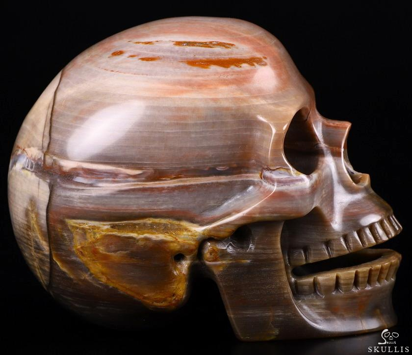 Petrified Wood Crystal Singing Skull