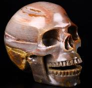 "Huge 5.2"" Petrified Wood Carved Crystal Singing Skull, Crystal Healing"