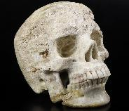 "Huge 4.8"" Coral Fossil Carved Crystal Skull,Super Realistic, Crystal Healing"