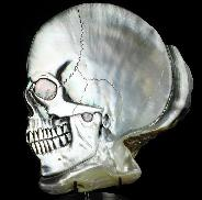 "5.1"" Shell Carved Crystal Skull, Crystal Healing"