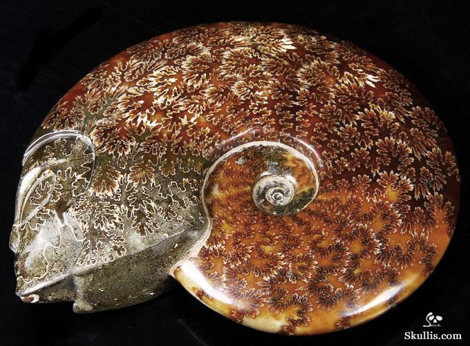 Ammonite Fossil Crystal Star Being