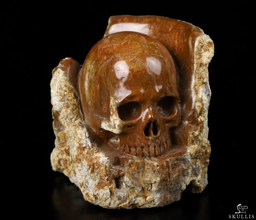Petrified Wood Crystal Skull Sculpture