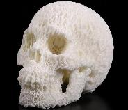 "5.0"" White Coral Carved Crystal Skull, Realistic, Crystal Healing"