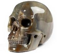 "2.0"" Petrified Wood Carved Crystal Skull, Realistic, Crystal Healing"
