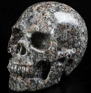 "5.0"" Crinoid Fossil Carved Crystal Skull, Realistic, Crystal Healing"