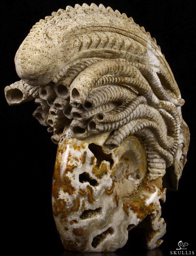 Chamber Ammonite Fossil Crystal Skull Sculpture