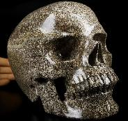 "AMAZING LIFESIZED 7.4"" Dinosaur Sauropoda Bone Fossil Carved Crystal Skull,Super Realistic, Crystal Healing"