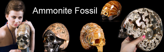 Ammonite Fossil Carved Skulls