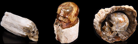 Petrified Wood BRANCH Carved Skulls
